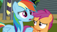 "Rainbow Dash ""who's the leader?"" S8E20"