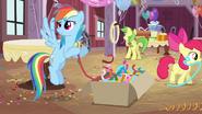 S02E14 Rainbow Dash rozpakowuje pudło z dekoracjami