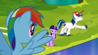 Shining Armor explaining that the Crystal Ponies got hurt S3E12