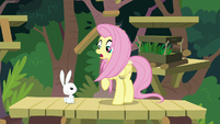 Fluttershy surprised by Angel in front of her S9E18