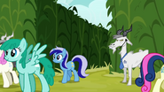 Minuette walking