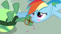 Rainbow Dash affectionatly blushing S3E11