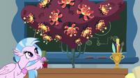 Silverstream puts apple on sneeze tree's desk S8E15