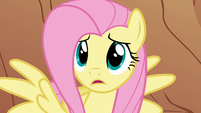 Fluttershy 'But why ' S1E21