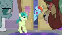 Rainbow Dash shouting -next!- S8E16