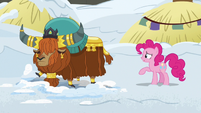 Pinkie Pie asks what Rutherford is doing S7E11