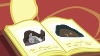 Fluttershy showing the hibernation book S5E5