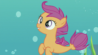 """Scootaloo """"with their sweet maneuvers"""" S8E6"""
