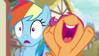 Scootaloo excited for Rainbow Dash S6E7