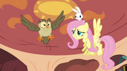 Fluttershy and Owlowiscious in the air S03E11.png