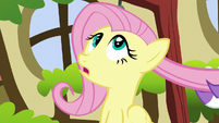 Fluttershy looking up S5E13