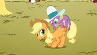 S01E13 Spike próbuje utrzymać się na grzbiecie Applejack