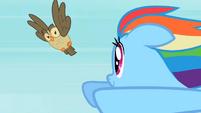 Rainbow Dash Owlowiscious 3 S02E07