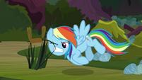 Rainbow picks a cattail with her teeth S8E17