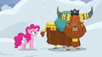 Pinkie Pie -avalanches like this- S7E11