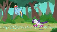 Rarity and Rainbow Dash enter the woods S8E17