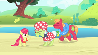 Apple Bloom -We'd be a cinch to win!- S4E20