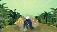 Jungle cats charging through the jungle S9E21