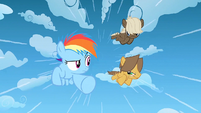Filly Rainbow and the colts racing S1E23