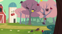 Cherry farm's orchards S2E14