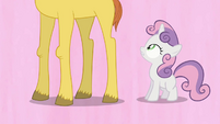Sweetie Belle and a tall colt S2E17