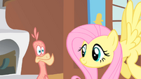Fluttershy waiting for Philomena to sing S01E22