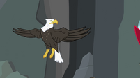 Bald eagle not headless S2E7