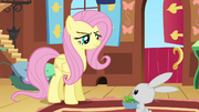 Resolute Fluttershy S2E19.png