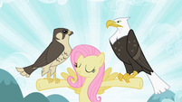 Fluttershy with falcon and eagle S2E07