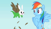Rainbow Dash seeing Angel-Gummy-Owlowiscious S2E7