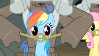 Rainbow Dash question look S1E19