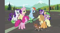 Rainbow Dash's friends gathering around Rainbow Dash and Tank S2E07