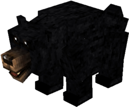 Black bear.png