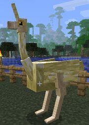 Light ostrich.jpg
