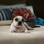 Stella(2).png