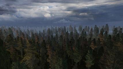 Forest (LA)