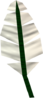 Feather detail.png