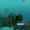 Large Spinefish