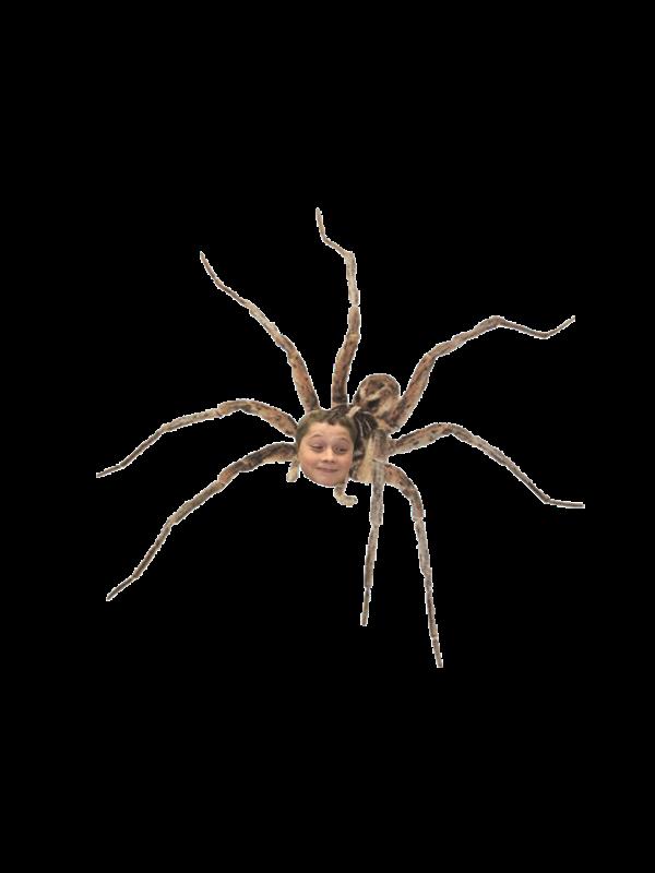 Julian Spiders