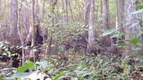 REAL Skunk Ape Sighting!