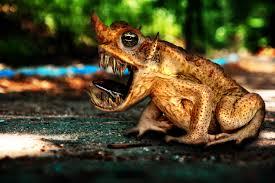 Toad (Rainy Season)