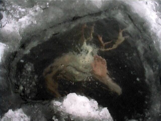 SCP-924