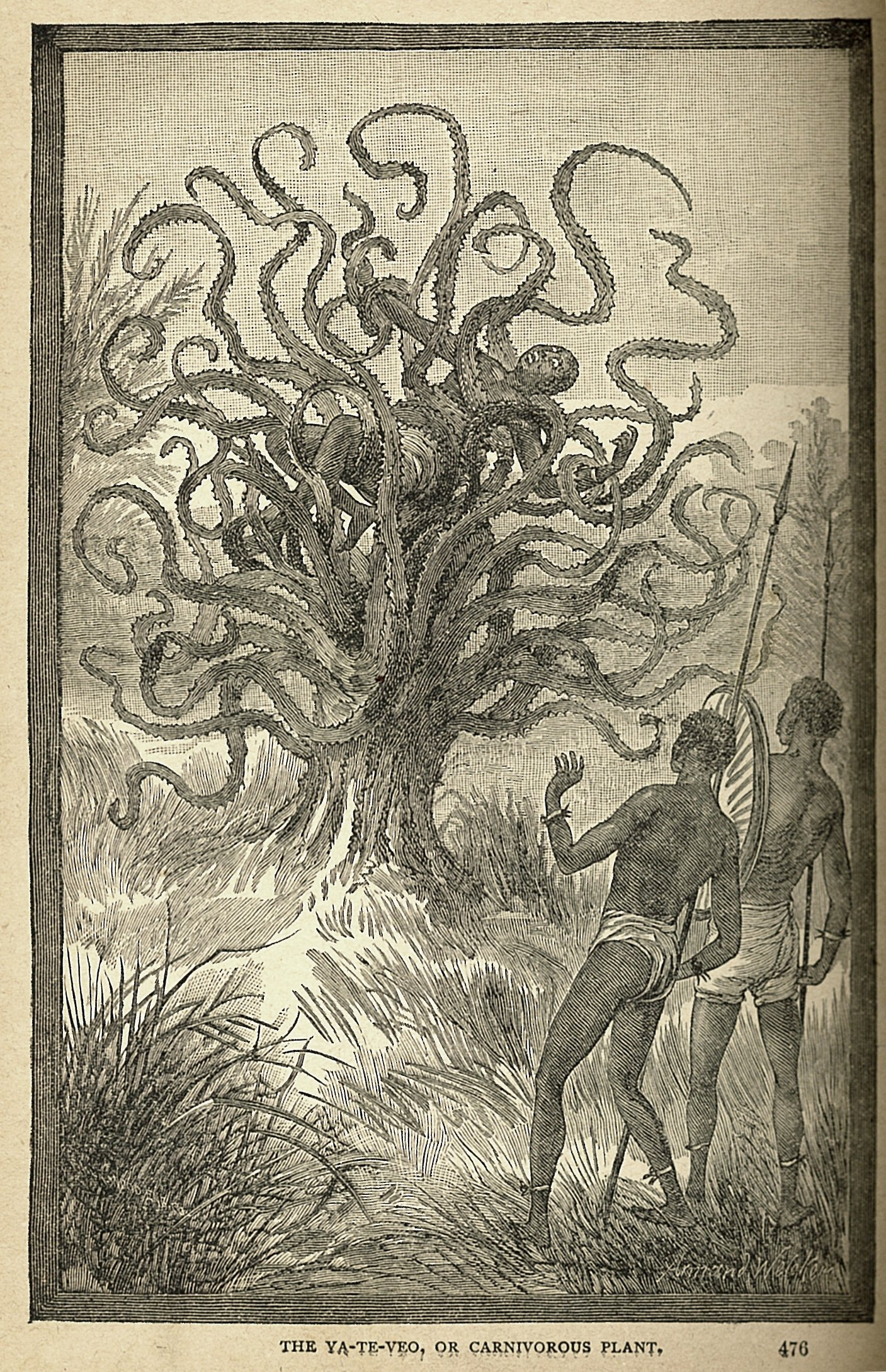 Man-Eating Tree