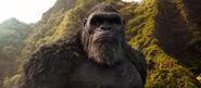 Adult Kong