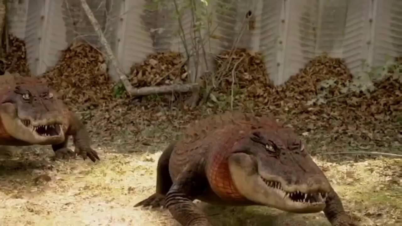 Redneck Gator