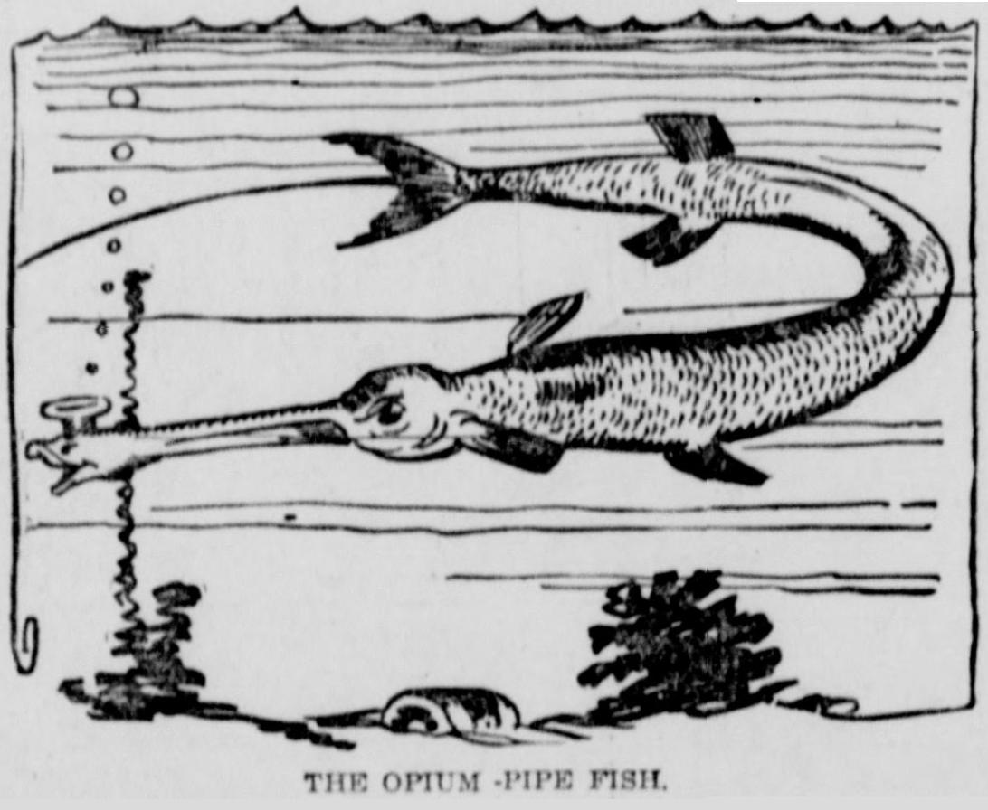 Opium-Pipe Fish