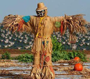 Scarecrow 15
