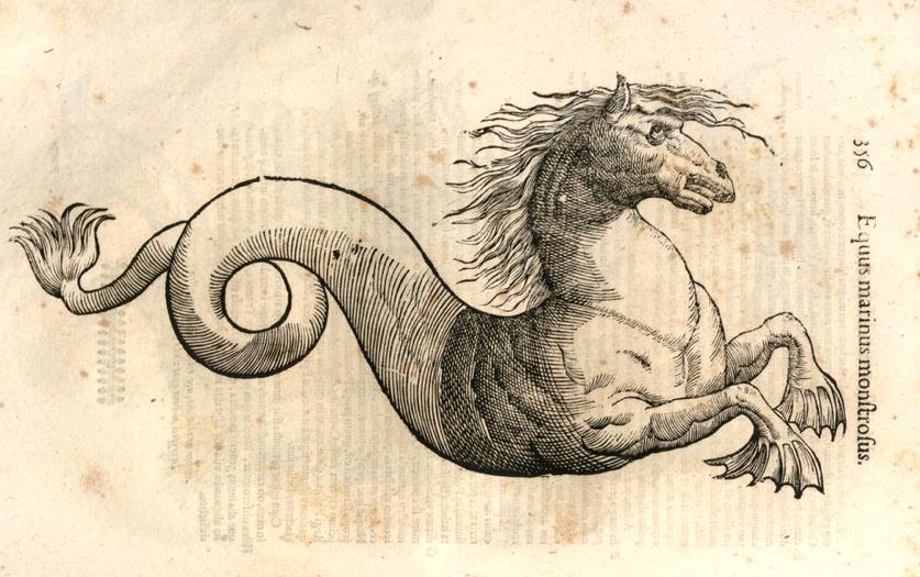Hippocamp