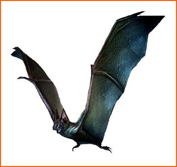 Infected Bat
