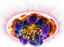 Divine Boons.png